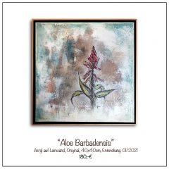 Acrylbild-AloeBarbadensis