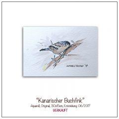 Aquarell-Buchfink