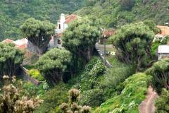 drachenbäume-barlovento