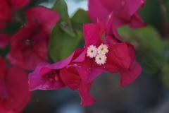 flordelapalma